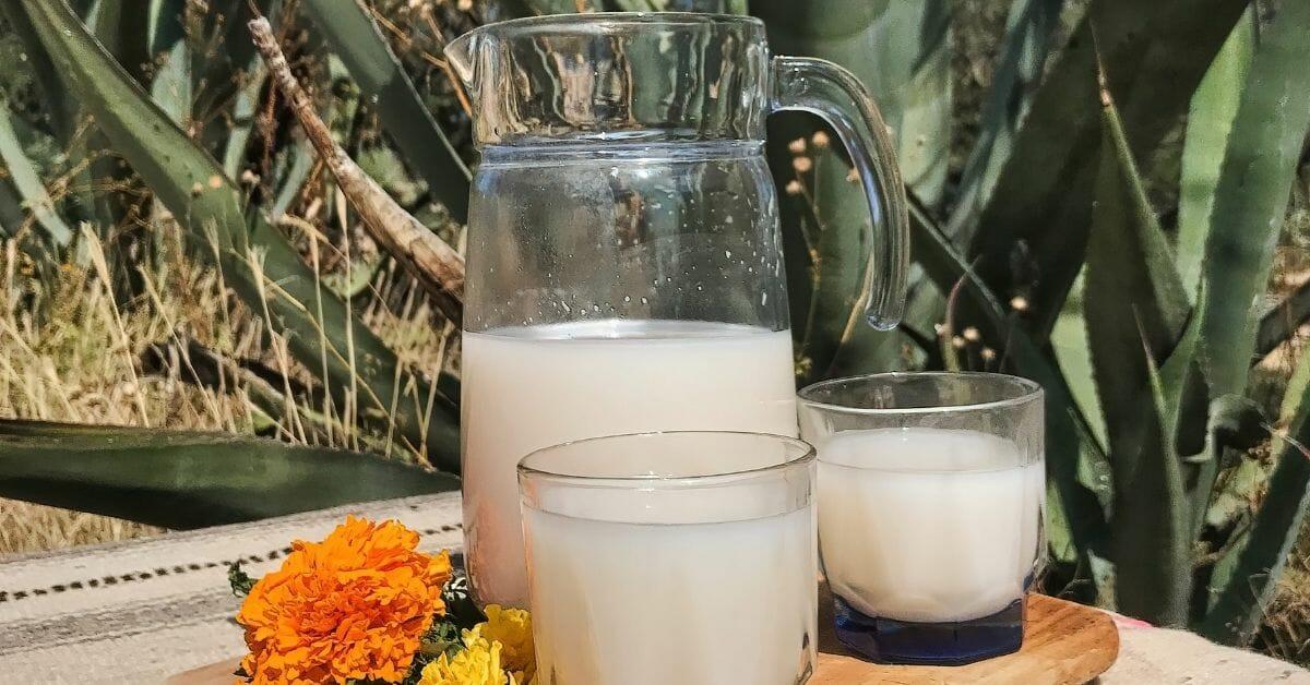 blogue - alcools mexicains - pulque
